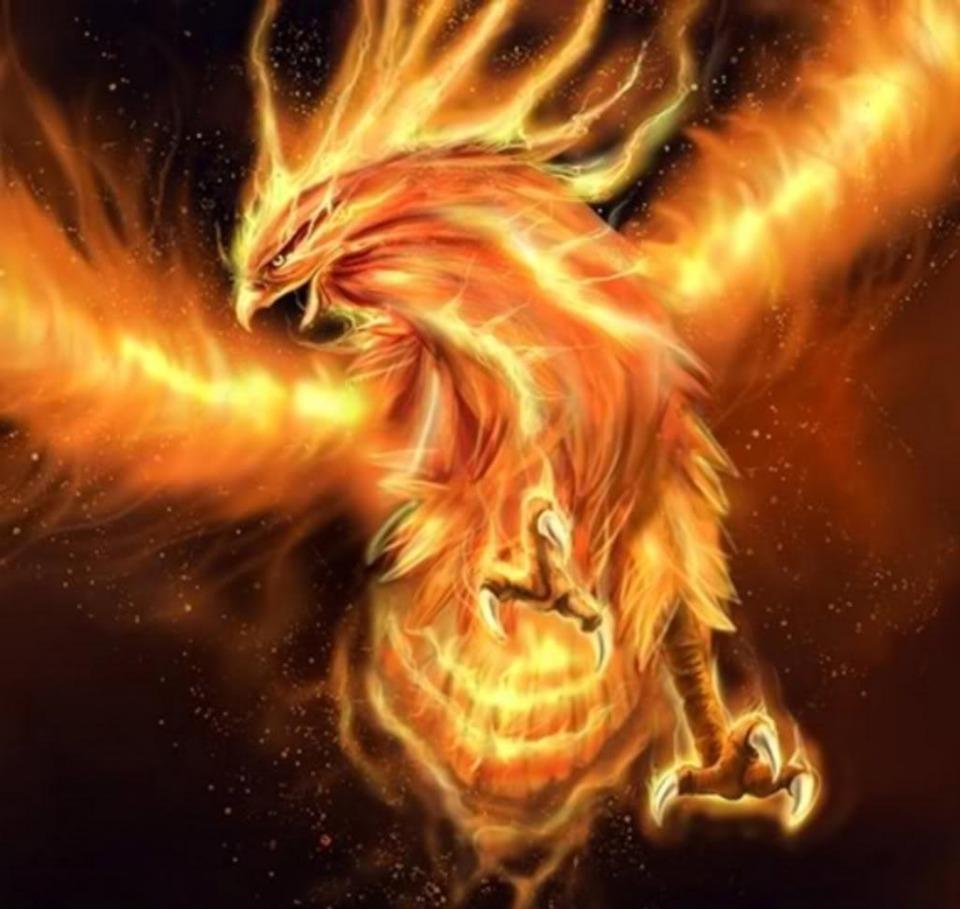 Phoenix is a Fire Bird