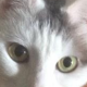 Avatar image for banes_cat
