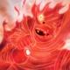 Avatar image for odinsonnn