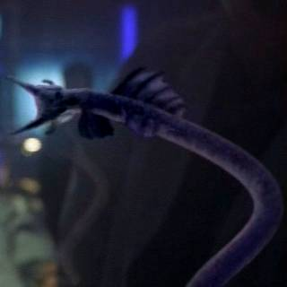 goa'uld symbiote